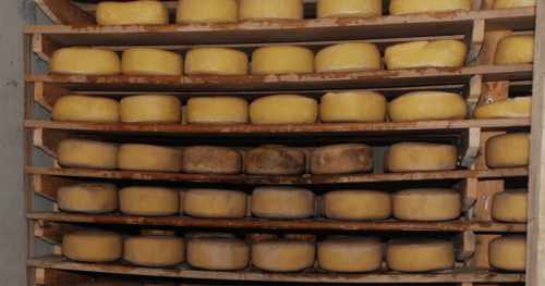 Inside the cheese cave