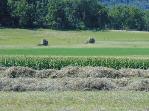 More hay bailing in late summer